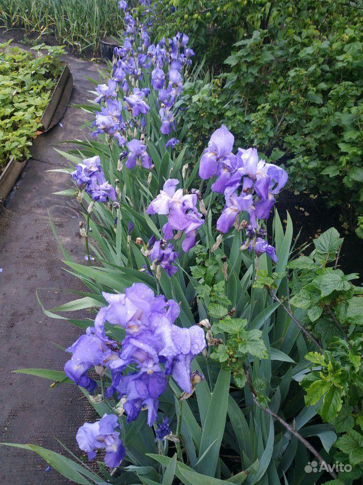 Цветы купить на Зозу.ру - фотография № 10