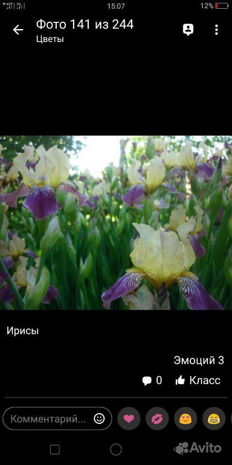 Ирисы купить на Зозу.ру - фотография № 2