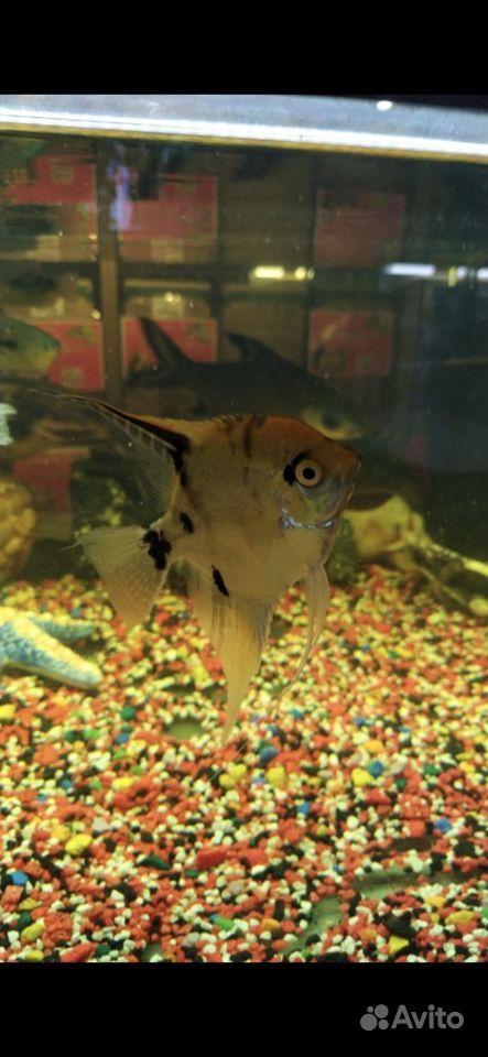 Готовый аквариум купить на Зозу.ру - фотография № 3