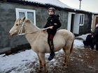 Монгольскый лошадь