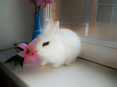 Отдам в добрые руки кролика