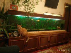 Продается аквариум 475 литров