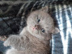 Котенок,джентльмен