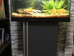 Аквариум aquael 60 литров с тумбой