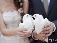 Голуби на свадьбу и на другие праздники