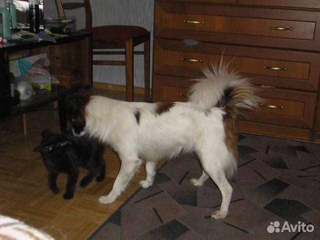 комнатная собачка 4 буквы - фото 6