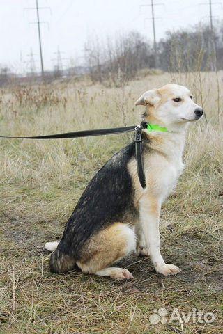 Отдам щенка девочку купить на Зозу.ру - фотография № 9