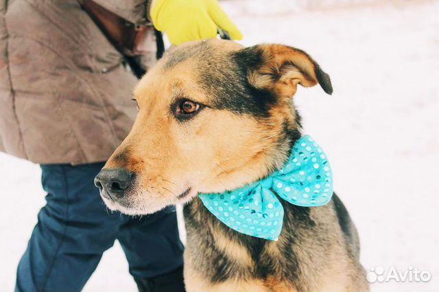 Взрослый пёс из приюта в дар купить на Зозу.ру - фотография № 7