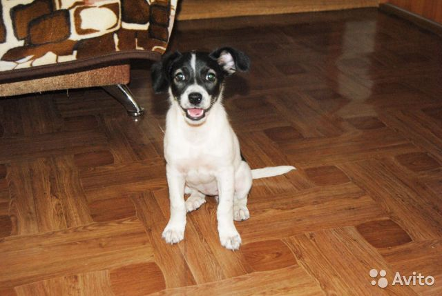 Собака  89191405223 купить 1