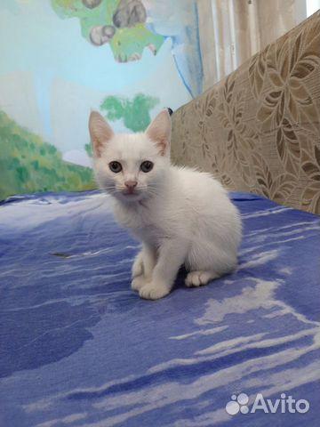 Отдам котенка в хорошие руки бесплатно  89246079648 купить 1