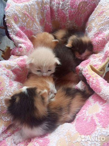 Отдам котят  89278943003 купить 6