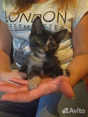 Kitty  89205372110 buy 2