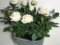Композиция подарочная,живые розы (беспл. доставка)