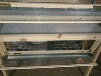 Клетки для перепелов,брудеры для цыплят на заказ