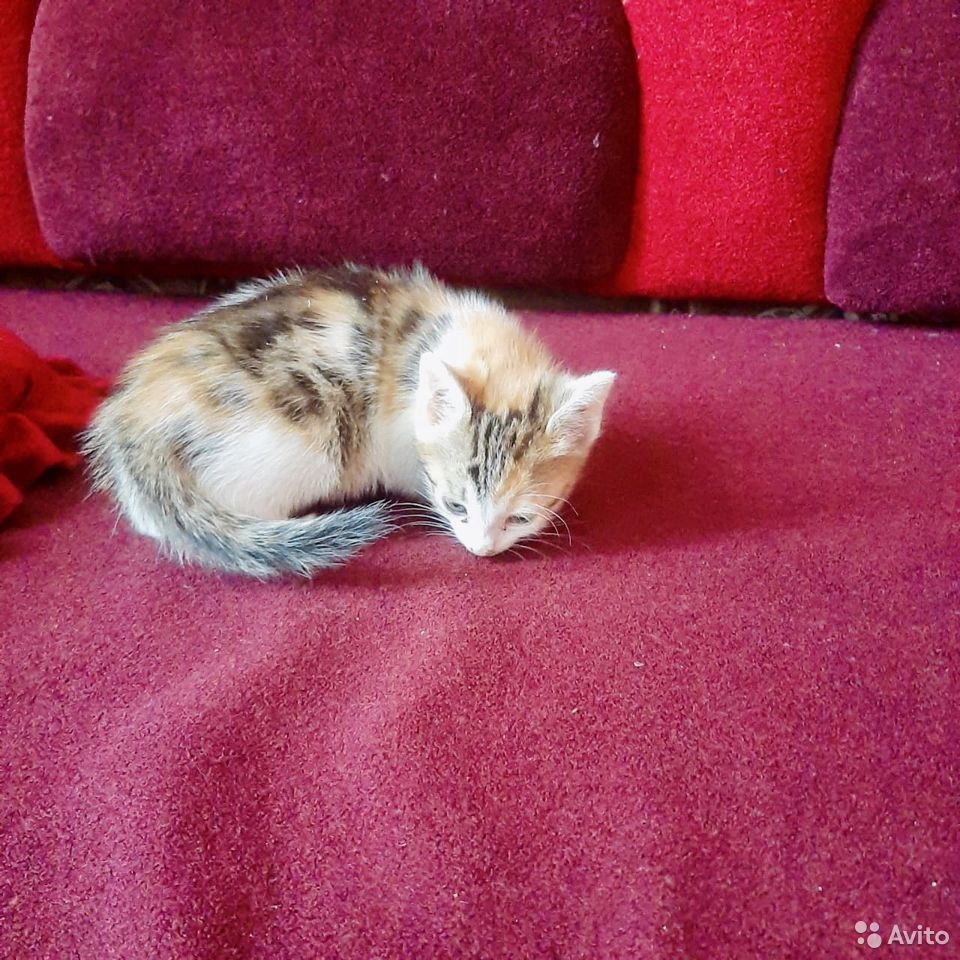 Give kitten in good hands  89379140006 buy 3