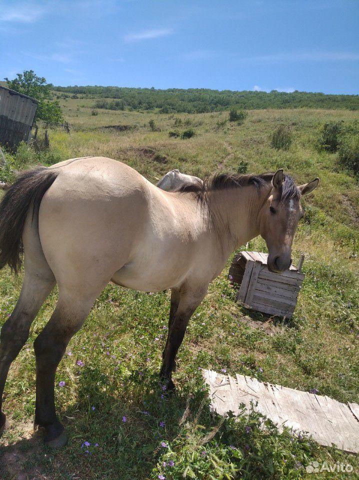 Лошадь  89894570223 купить 1