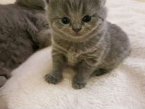 Котята родились 2 июня