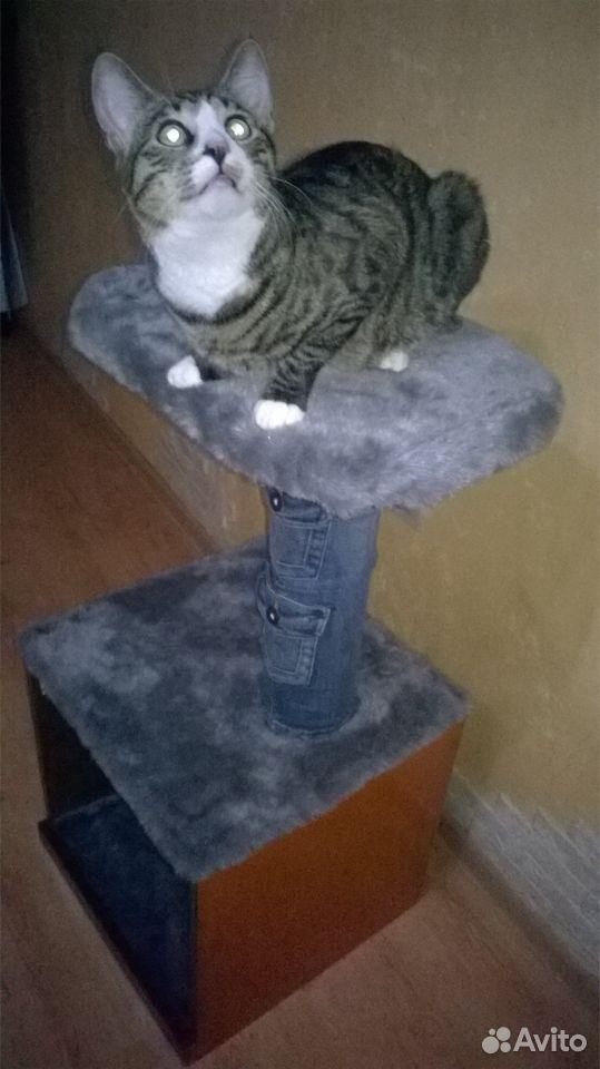 Домик для кота  89005668437 купить 1
