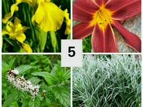 Многолетние растения набором по 4 растения