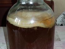 Чайный гриб Камбучи