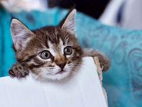 Отдам котёнка в дар в добрые руки