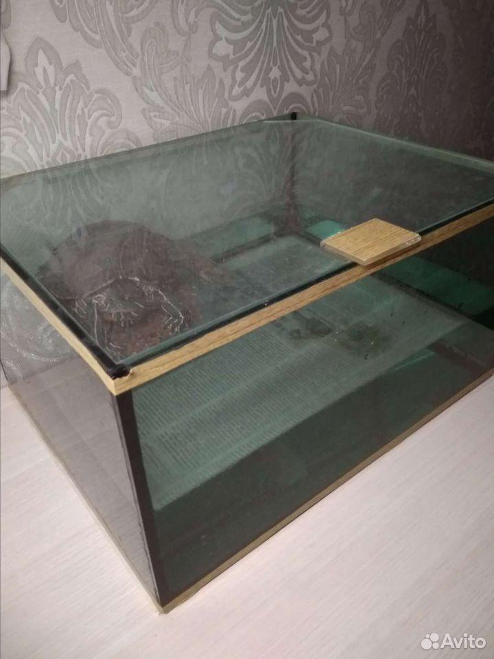 Черепаха  89513220132 купить 4